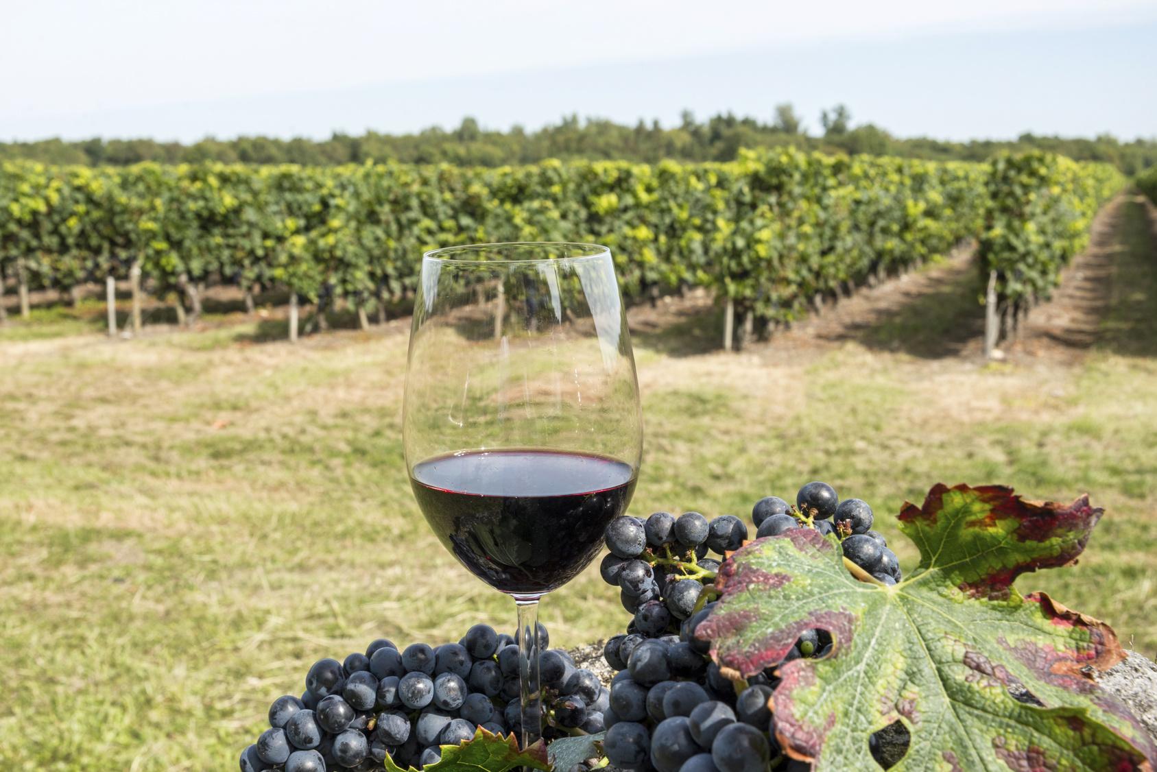 D'ici à 2022, le marché français du vin bio devrait quasiment doubler