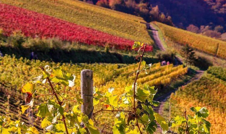 Entretien du sol : le paillage comme solution biologique