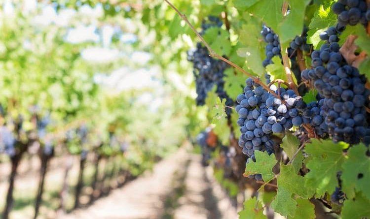La biodynamie : découvrez cette méthode d'agriculture biologique